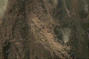 纤维挂膜照片1.png